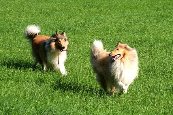 Bailey & Timmy