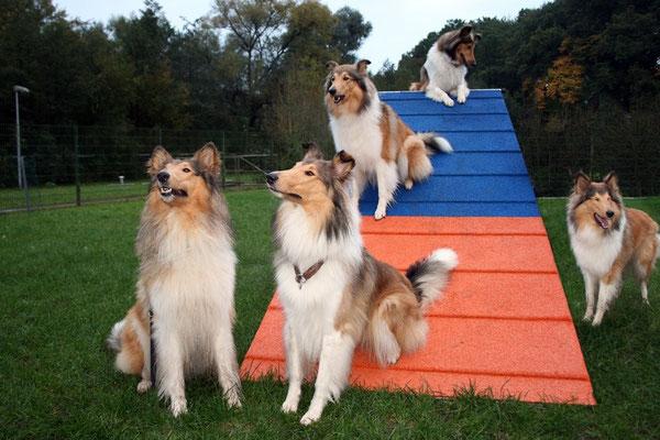 Die angereisten C-chen Connor, Crispy, Calina, Cleo und (Cam-)Pino