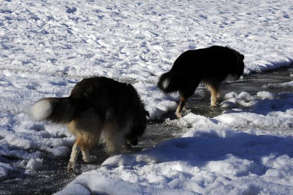 Crispy und Milos beim Eislauf ;)