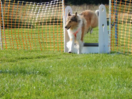 Beim Flyball-Training