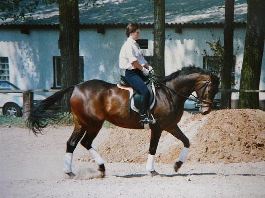 Als angehendes Dressurpferd im Alter von 5 Jahren
