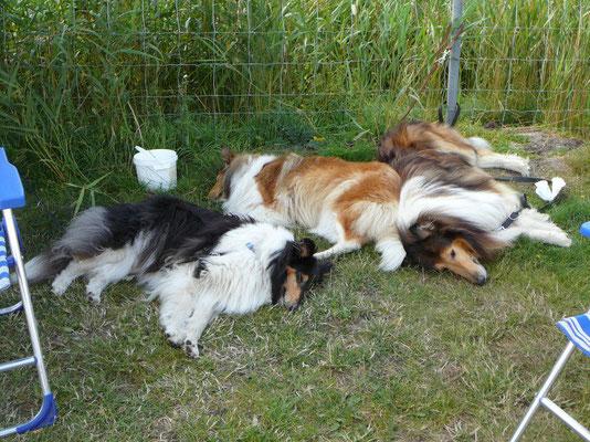 Drei Rosennestler schlafend: v.li. Klara, Meggy, Carlo