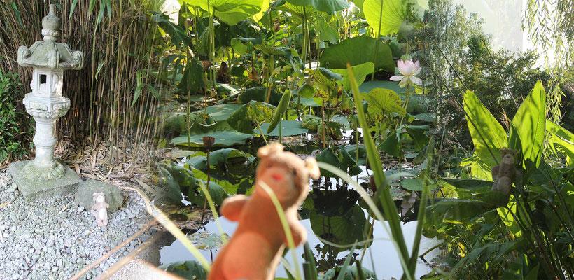 Moka la loutre et les plantes aquatiques aux Jardins Aquatiques l'été 2017 avec l'illustratrice Cloé Perrotin