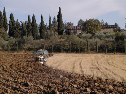 plowing Villa, Casafredda, Arezzo, Toscana, Tuscany, Italy