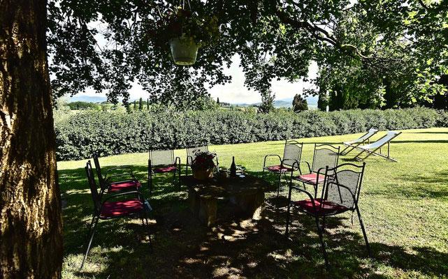 Sycamore tree, shade, villa, Casafredda, Arezzo, Toscana, Tuscany, Agriturismo, casa vacanza