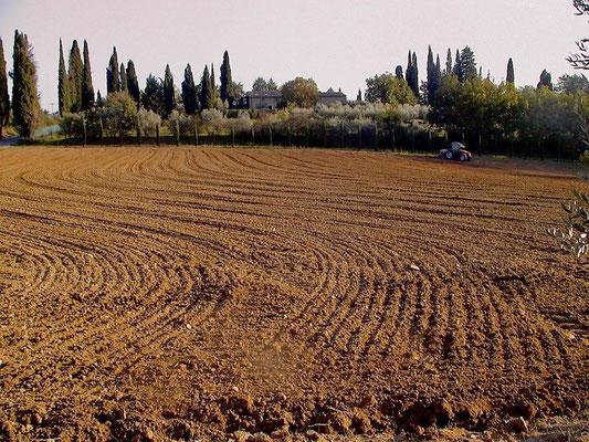 sowing, Agriturismo, Casafredda, Arezzo, Tuscany, Toscana