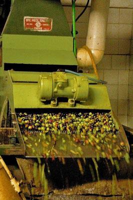 olives press,  Agriturismo, Casafredda, Arezzo, Tuscany, Toscana