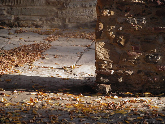 Autumn, wisteria, Villa, Casafredda, Arezzo, Toscana, Tuscany, Italy