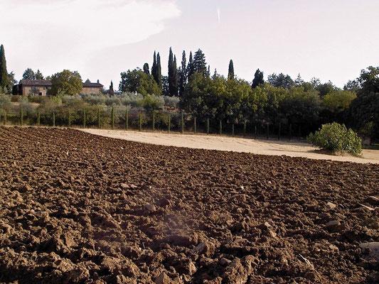 plowing, arable land, Agriturismo, Casafredda, Arezzo, Tuscany, Toscana