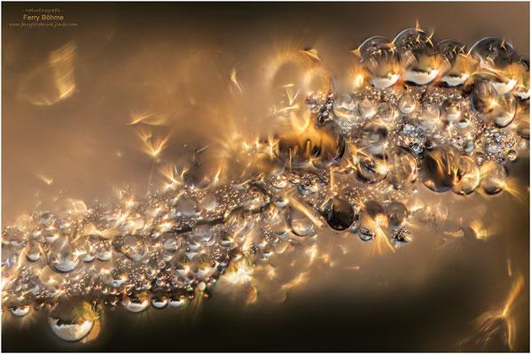 Feuerspiel - Sonnenaufgang in den Tautropfen eines Libellenflügels