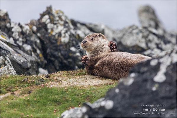 Neue Schottlandbilder gibt es ...