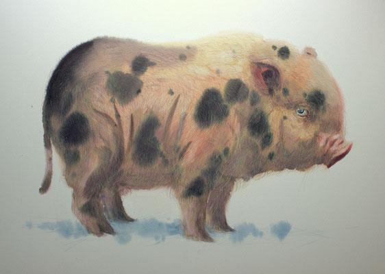 Lucky, watercolor, 37x53cm