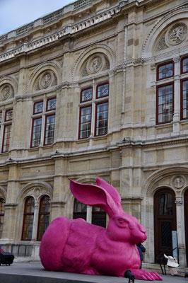 Opernhaus Wien Hase