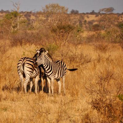Krüger Park, Südafrika