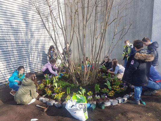 Die KiPa-Vertreter haben zusammen mit Frau Bernsmeier den Frühling auf den Schulhof gebracht.