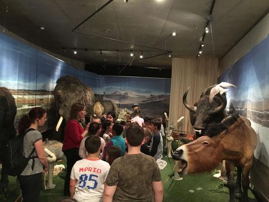 Der Schulausflug ins Neanderthalmuseum wurde organisiert und mitfinanziert.