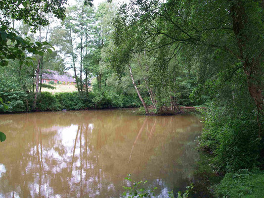 Teich am Linnenbach