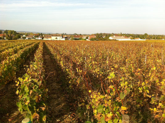 La Combe in autumn, after the harvest