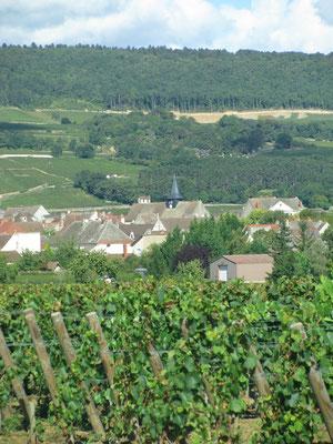Puligny vu depuis La Combe