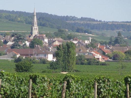 Meursault vu depuis Corvée des Vignes