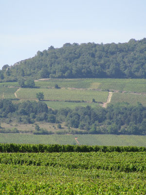 Slopes of the  First Cru vines seen from Les Equinces
