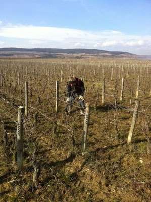 Pruning under clear skies