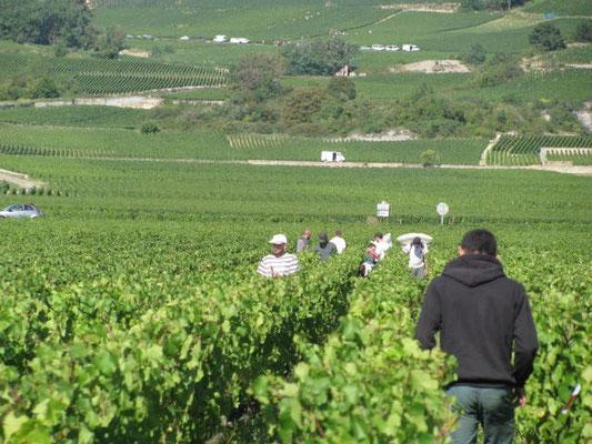 perspectif depuis Corvée des Vignes vers les Premiers Crus vignes sur la côte