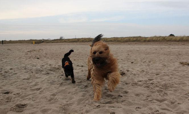 dieses Mal kann ich den überaus tollen Weidefelder Strand gemeinsam mit Momo erkunden
