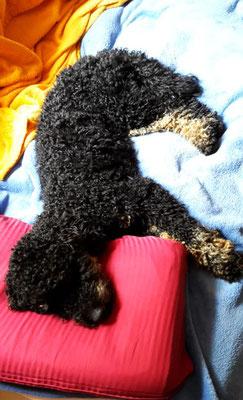 und selbst Momo schläft