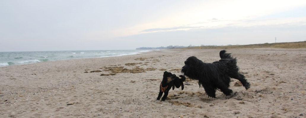 Momo & Exel gemeinsam am Strand
