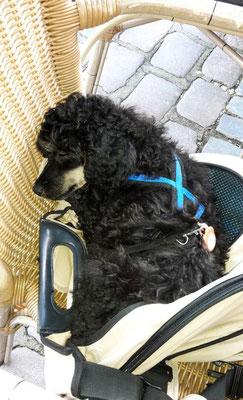 erster Ausflug Ende September in Flensburgs Innenstadt - Nickerchen im Café