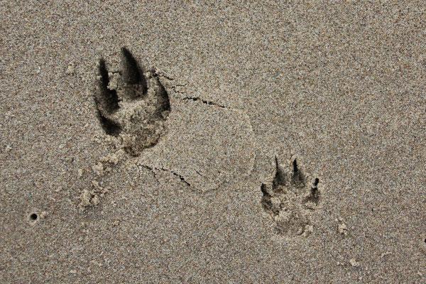 deine Spuren im Sand... (Andras & Momo)