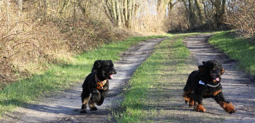 Momo & Nico im Freilauf