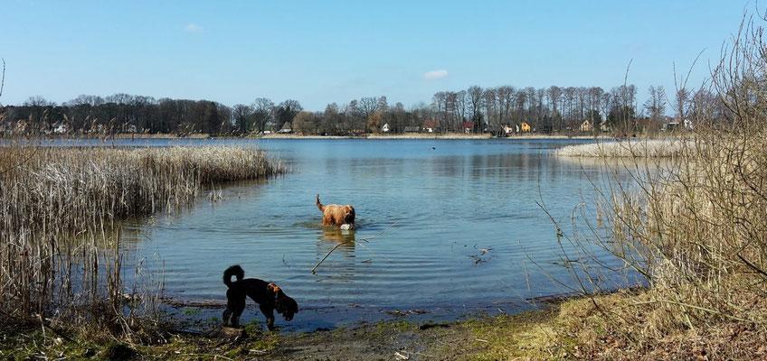 Momo ist zwar neugierig, aber das Wasser ist einfach zu nass