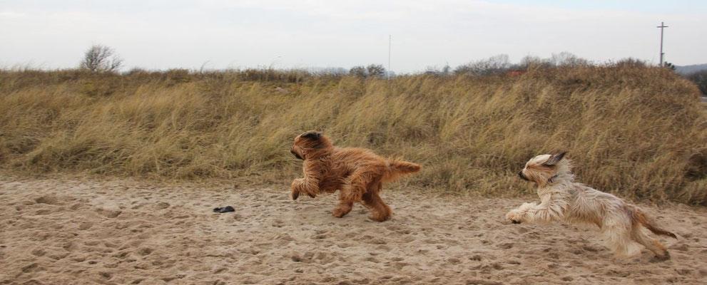 Hermine von den Buschräubern gemeinsam den Strand unsicher machen