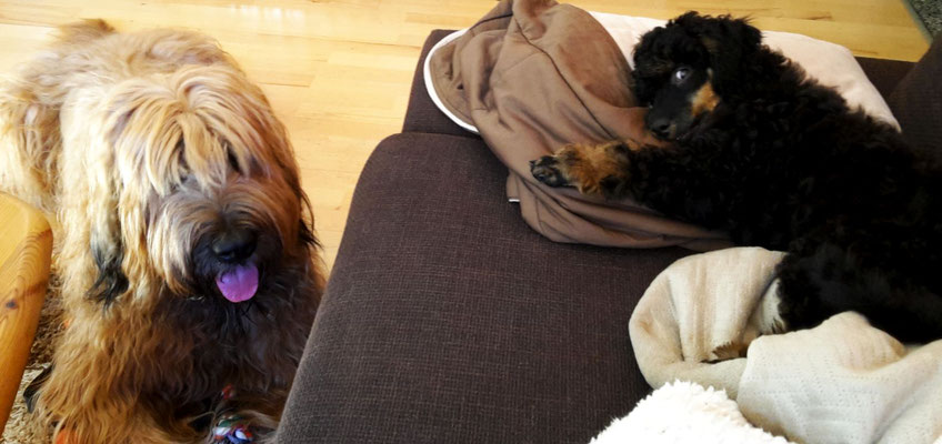 für Andras kein Problem: Momo ist von Anfang an ein Couch- & Bettschläfer