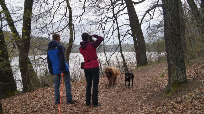 Tour um den Trebuser See mit Anouk & ihrem Herrchen und Lara (Dank Lara ist unser Frauchen auch auf ein paar Fotos drauf!)