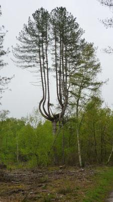 2013-05-01 - Un drôle d'arbre