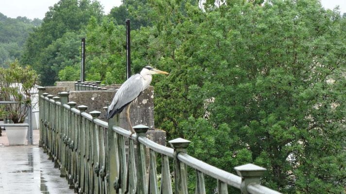 Héron sur le pont canal