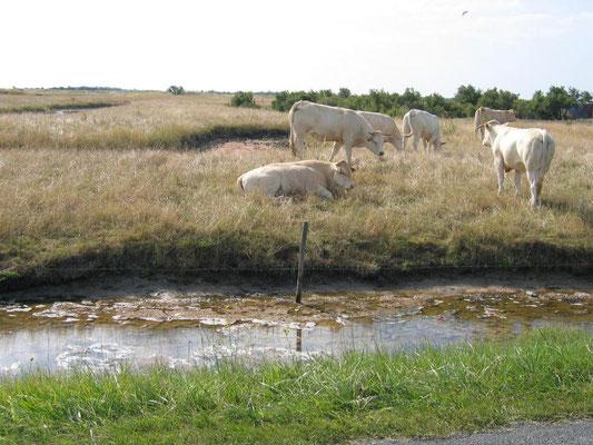 Les marais entre Boyarville et St Pierre