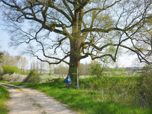 2013-04-21 - Un beau chêne