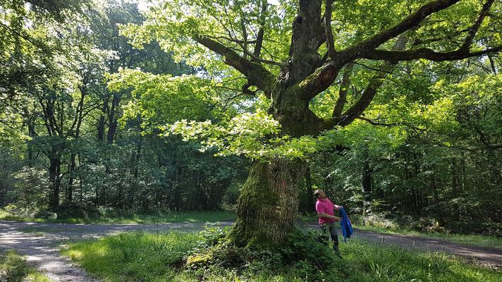 Thierry au pied d'un chêne du bois su salut