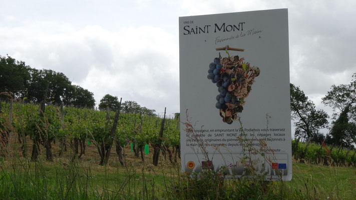 Nous traversons l'appelation Saint Mont