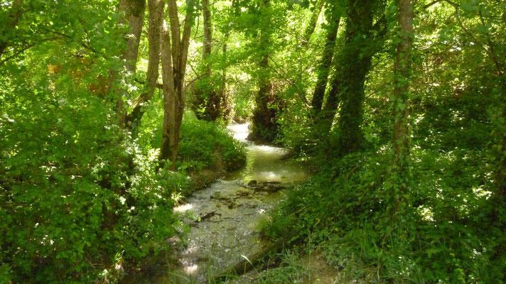 Petit ruisseau bucolique