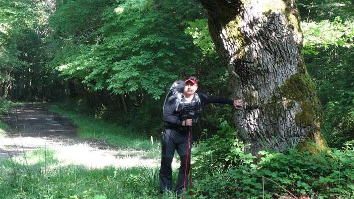 Philippe au pied d'un chêne du bois su salut