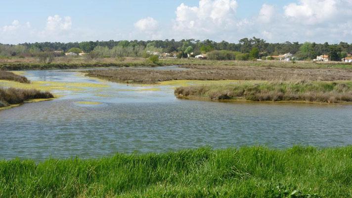 St Trojan - Vue des marais à partir de la digue Pacaud
