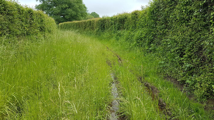 Le chemin inondé à Loye sur Arnon