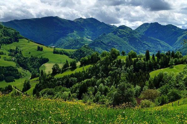Ausblick bei der Fahrt von Rabenreith in den Pechgraben auf die Ennstaler Alpen