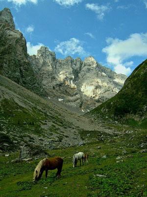 Hafflinger im Gebiet der oberen Valentinalm