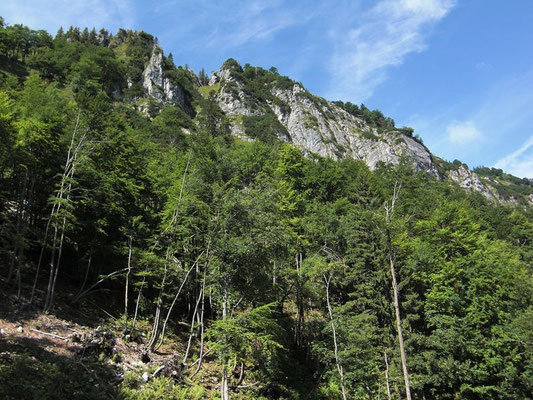 Gegen Osten bricht die Bodenwies in Felswänden ab.